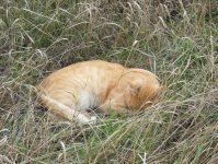 спящий в траве кот