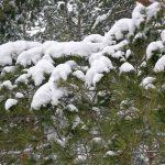 Зима в Воронеже