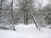 тропа в снежном лесу