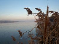 тростник над замерзшим прудом