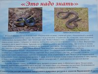 змеи Воронежской области