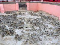 фундамент из костей мамонта